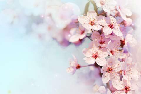 立春习俗之迎春
