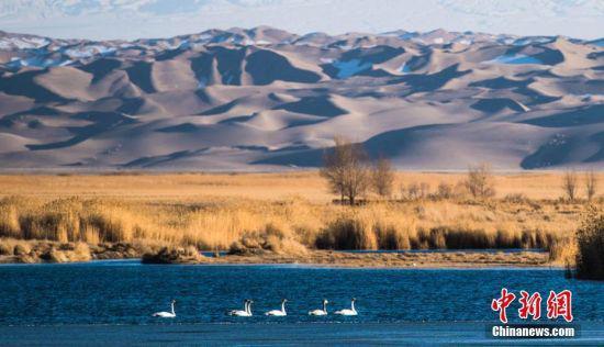 成群的各类鸟儿在水中游弋觅食。王斌银摄