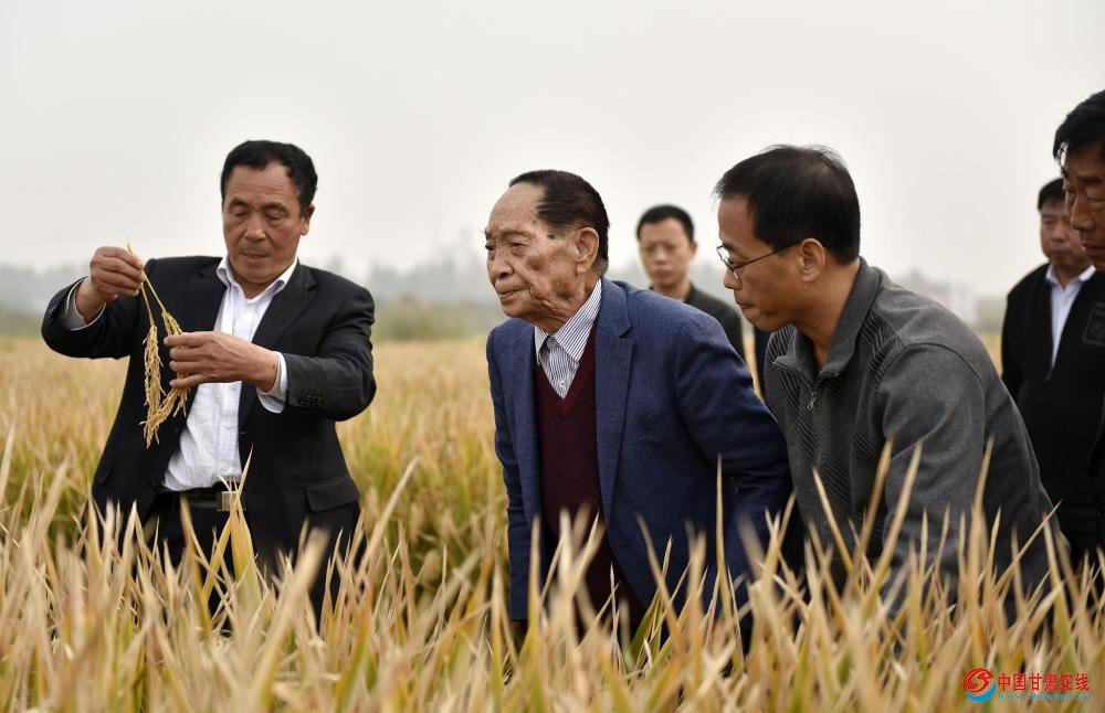"""袁隆平""""超级稻""""亩产1149公斤再创纪录"""
