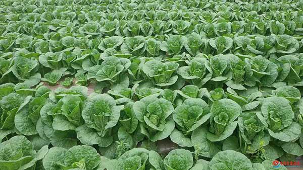 甘肃欣庆凹凸棒复合微生物肥料获国际领先成果