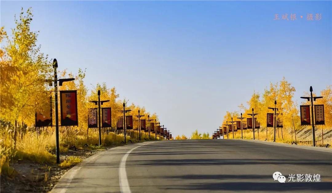 敦煌美景:敦煌胡杨大道初具规模